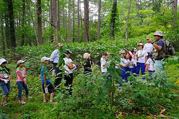 森の中でツリーウォッチング